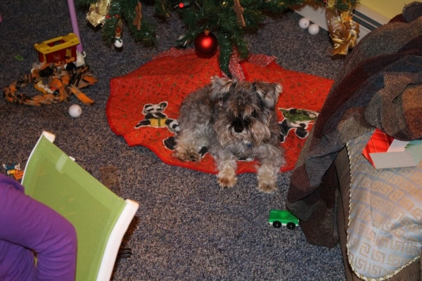 Full & Content Christmas Dog