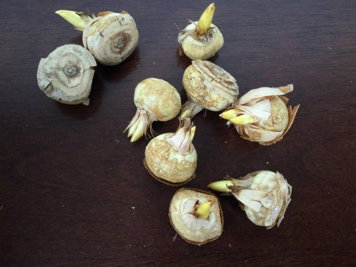 Honey & Sage November 2015 Sage Woman Box bulbs