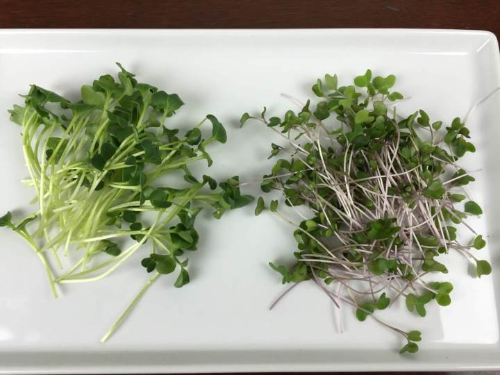gardenbox review microgreens review