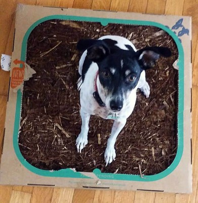 Bark Potty October 2016 Subscription Box Review