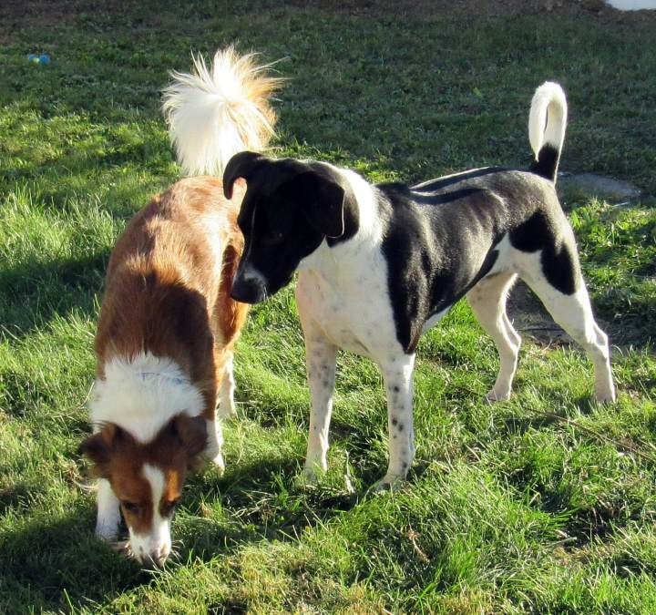 Daisy and Odie
