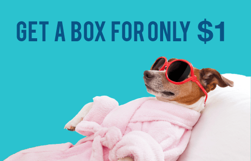 Pooch Perks First Box $1 with 12-Month Subscription!