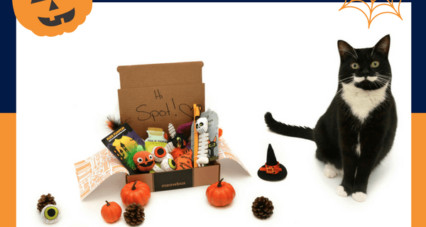 Meowbox October 2017 Spoiler + Coupon!