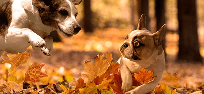 Loot Pets November 2017 Spoilers + Coupons!