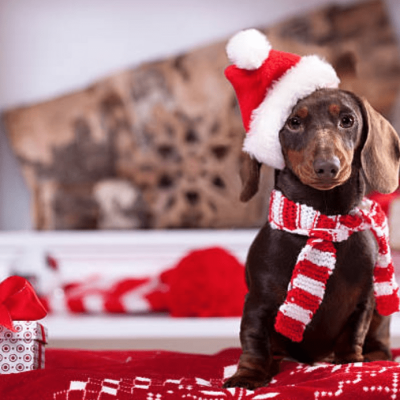 Puptown Girl Box Cyber Monday 2017 Coupon Code: Save 15% Off!