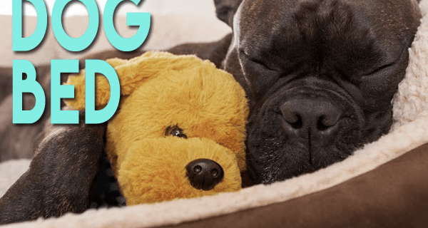Pet Treater Coupon: Free Dog Bed With Subscription TODAY ONLY!