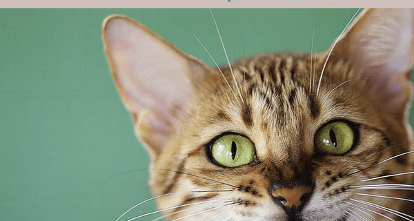 Pet Treater Cat Pack Flash Sale: First Month $1 – TWO DAYS ONLY!