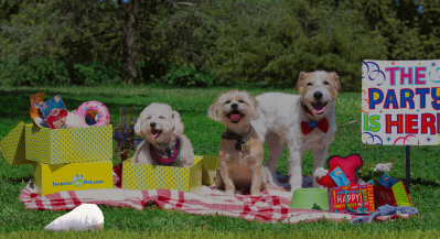 Surprise My Pet Coupon: Get 10% Off Any Subscription!