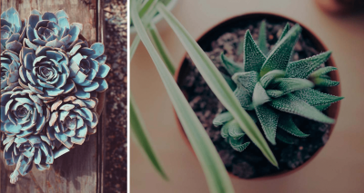 New Subscription Boxes: Succulent Studios Available Now + Coupon!