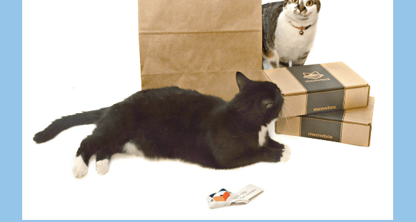 Meowbox Black Friday Coupon: 20% Off Subscriptions!