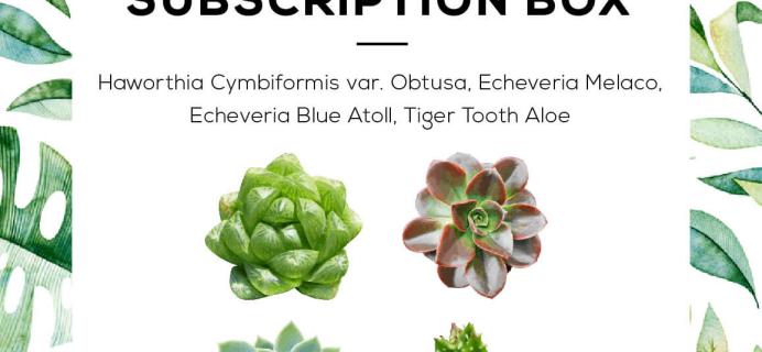 Succulents Box June 2019 Full Spoilers + Coupon!