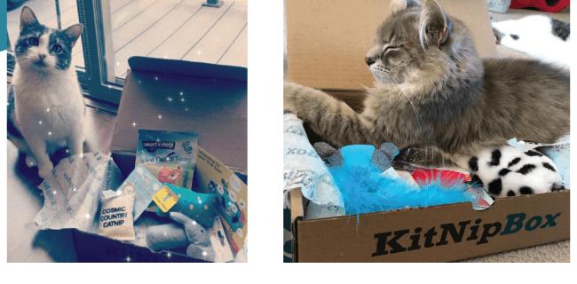 KitNipBox Fourth of July Sale: Get 16% Off!