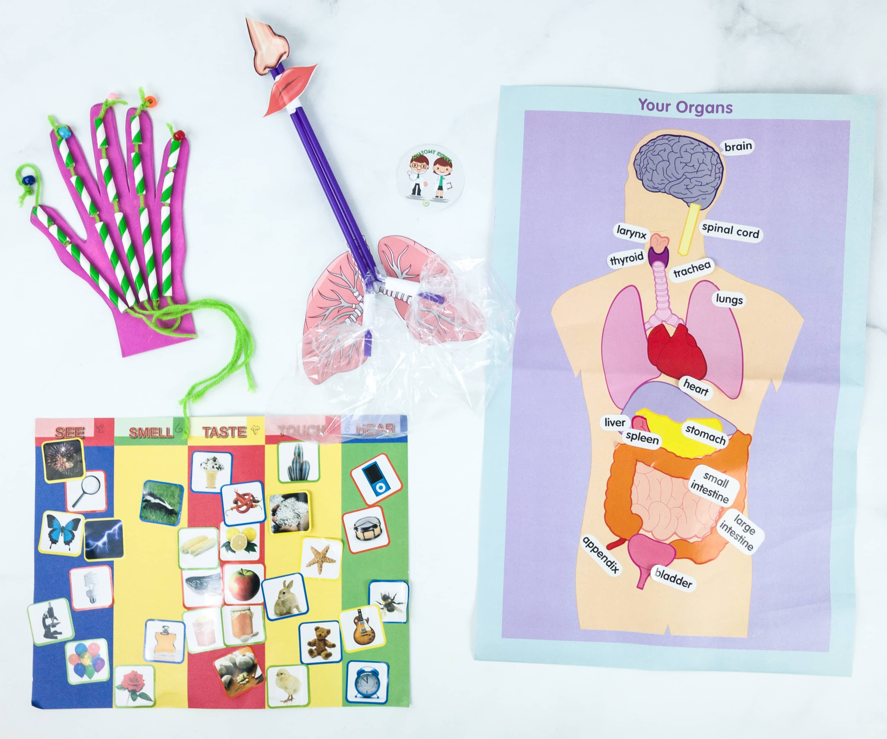 Green Kid Crafts The Human Body Subscription Box Review 50 Off Coupon Hello Subscription