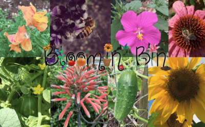 Bloomin' Bin Black Friday Coupon: Save 25% on all subscriptions!