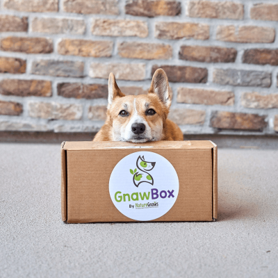 Gnaw Box – Review? Dog Chew Subscription + 50% Off Coupon!