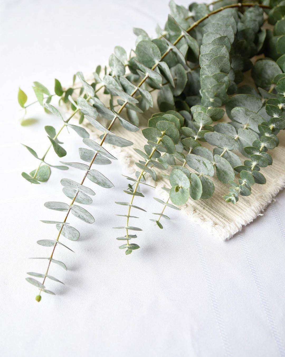 Eucalyptus Farms Review Plant Subscription Coupon Hello Subscription