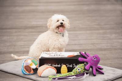 BoxDog Easter Sale: Get $15 Off Any Box!