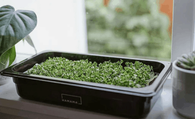Hamama – Review? Microgreens Subscription!