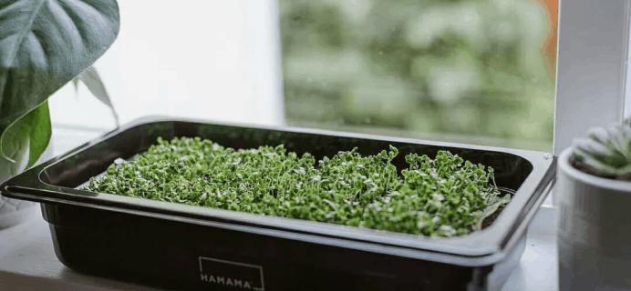 Hamama – Review? Microgreens Subscription!