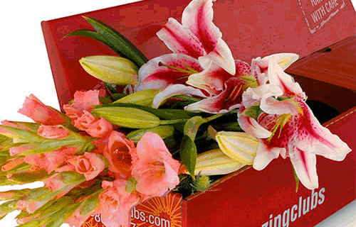 Amazing Clubs Flower of the Month Club – Review? Premium, Exotic Flower Subscription!