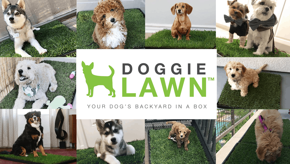 DoggieLawn Coupon: Get $5 Off First Real Grass Patio Potty!