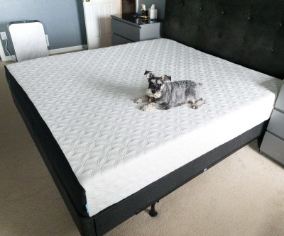 Cocoon By Sealy Premium Mattress In A Box Review!