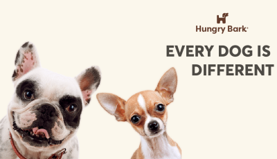 Hungry Bark Coupon: Get 20% Off!
