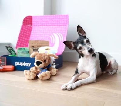 PupJoy Summer Sale: Get $10 Off!