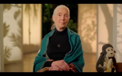 MasterClass Dr. Jane Goodall Conservation Class Review
