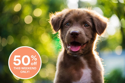 Spot and Tango Labor Day Sale: Get 50% Off!