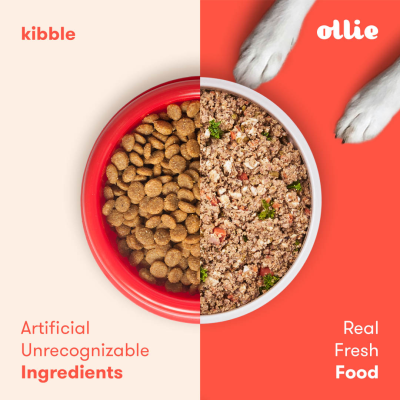 Ollie Cyber Monday Coupon: Get 60% Off First Box Fresh Dog Food!