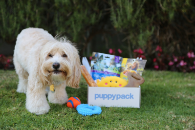 PuppyPack – Review? Dog Subscription + Coupon!