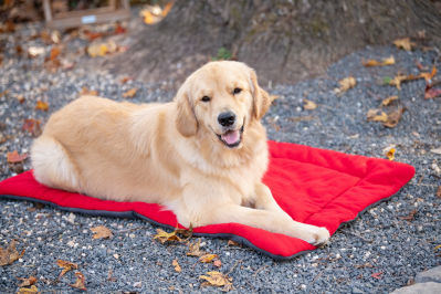 BoxDog Winter Sale: FREE Dog Bed & More!