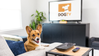DOGTV Coupon: Get 30 Days FREE Trial!