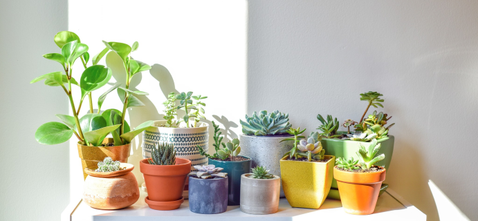 Succulent Studios Coupon: Get $2 Off + FREE Shipping On Your First Box!