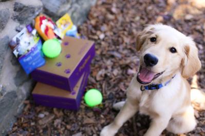 PupBox Summer Kickoff Sale: First Box 75% OFF!