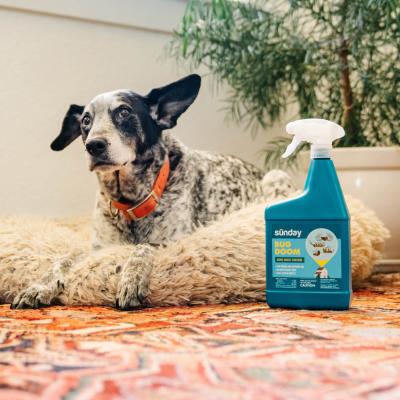 Sunday Smart Pest Plan: Customized To Fight Off Pest Problems!