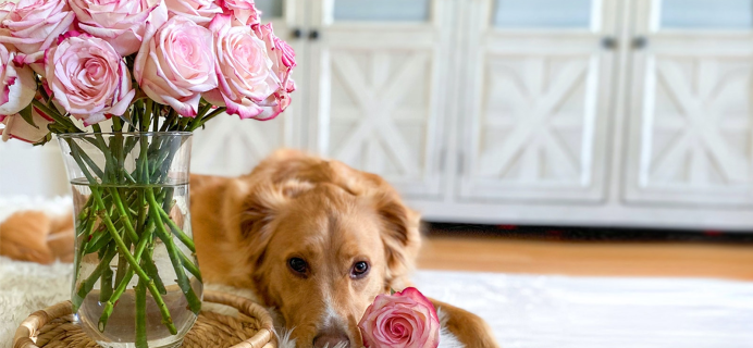 BloomsyBox Launches New Subscription: Pet-Safe Blooms!