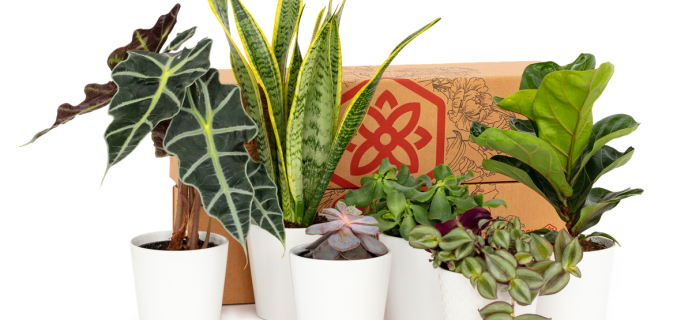 BloomsyBox Launches New Subscription: Bloomsy Plants!