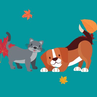Subcription Boxes for Pet Lovers