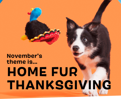 BarkBox November 2021 Home Fur Thanksgiving Box + FREE Box Coupon!